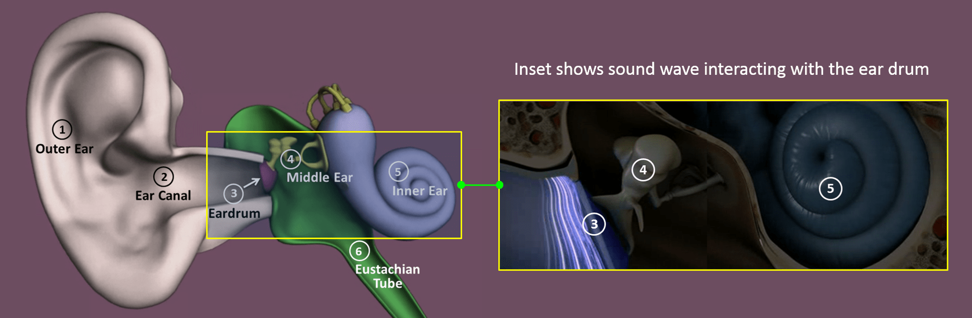 From Sound to Hearing
