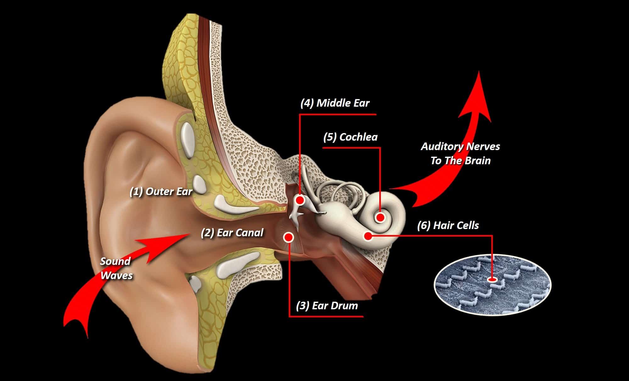 How We Hear